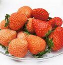 いちご「桃薫・きらぴ香」食べ比べセット計12パック