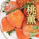 いちご苺「桃薫」~桃の香り&食感~4パック