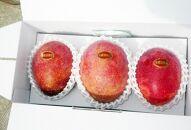 【2021年7月発送】平均糖度13度以上!アップルマンゴー1kg(2~3玉)