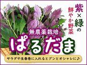 紫&グリーンが綺麗な野菜ぱるだま2kg(はんだま・水前寺菜)