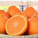 紀州有田産不知火(しらぬひ)約5kg