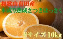 こだわりの和歌山有田産木成り熟成さつき八朔10kg(Mサイズ)