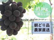 【農家直送(収穫日に発送)】種無し巨峰 ◆約3kg(5~7房)生産農園:後藤ぶどう園