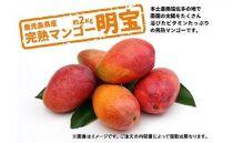 (訳あり)鹿児島県産 完熟マンゴー 約2kg以上(2021年発送分)