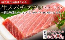 生メバチマグロ(刺身用サク)500g