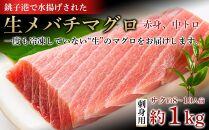 生メバチマグロ(刺身用サク)1kg