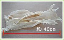 乾燥フカヒレ3枚入り(100g)