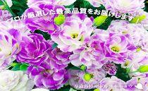 【冬春発送】与論島のトルコキキョウ【ミックス】20本以上