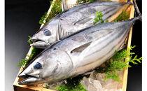 旬の天然魚介類の詰め合わせセット【A】