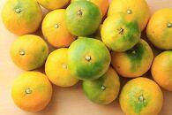 甘い青切りみかん5kgMS玉マルチ被覆栽培