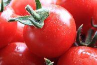 【2021年12月以降発送分】濃い朝採れ超完熟ミニトマト2kg