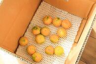 甘いみかん(ゆら早生)10kgMS玉マルチ被覆栽培