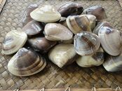 海の家協栄の九十九里産はまぐり 1kg(受付は6月15日~/10月以降のお届け)