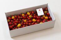 【12月発送開始】ドロップファームの美容トマト3kg箱