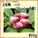 土佐鴨ハツ(フレッシュ冷蔵)約1kg/土佐鴨・土佐ジロー飼育研究会/カモ/かも/心臓