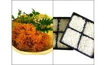 篠島産 生炊きちりめん山椒・しらす干しセット計1kg