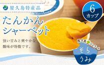 屋久島特産品たんかんシャーベット6カップ
