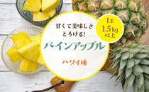 【2021年発送先行予約分】パインアップル1玉(ハワイ種)