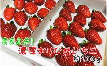 農家直送!濃厚完熟まりひめ苺12~18粒×2(約700g)