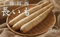 十勝川西長いも(5kg)