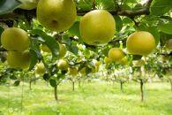 樹上完熟二十世紀梨 5kg