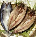 【脂のり抜群】肉厚で大きな<トロ鯖>3枚