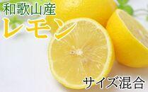■【産直】和歌山産レモン約3kg(サイズ混合)【2022年発送分】