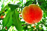 ★7月~8月発送★【特選】<甘い香りと果汁が自慢>桃約2kg(4~6玉前後)