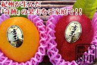 紀州完熟マンゴー『吉玉』【2玉入り】