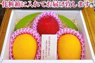 紀州完熟マンゴー『吉玉』【1㎏程度2~3玉入り】