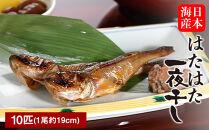 日本海産 はたはた一夜干し10匹セット
