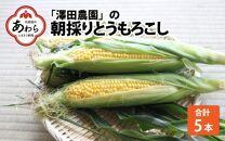 【先行予約】あわら「澤田農園」の朝採り直送 秋とうもろこし 5本