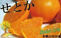 とろける食感!ジューシー 柑橘の王様 せとか 約3kg【予約】※3月上旬頃より順次発送(お届け日指定不可)
