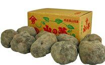 丹波篠山産山の芋秀品4kg箱