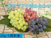 ★先行予約★旬のブドウ味くらべ2キロ【数量・期間限定】