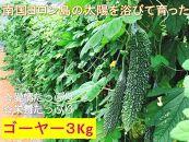 【2021年発送】栄養たっぷりほろ苦ゴーヤ3.0kg