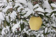 【ご予約(12月発送開始)季節限定・数量限定】冬恋はるか(2.5kg/8~11個)
