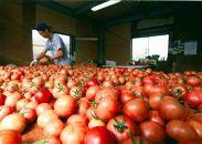 厳選ポークカレー&高級トマトハヤシ2種8個セット