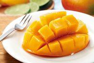 【奄美マンゴー秀品・美玉1kg】樹上完熟、農家直送!とろける甘さの黄金果肉