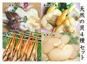 【愛知県産】天然の貝4種セット