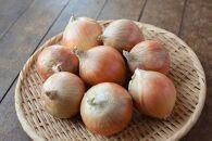 信州・むすび農園の玉ねぎ10kg