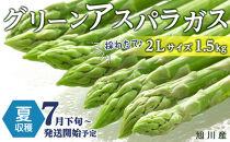 【先行予約】夏収穫グリーンアスパラ2Lサイズ1.5㎏(7月下旬~発送開始予定)