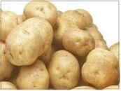 【期間限定】<網走産>秋の収穫美味きたあかり10kg