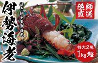 【期間限定・20セット限り】特大!活き銚子黒潮海老(伊勢海老)2尾(総量1kg以上)