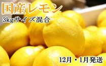 *12月・1月発送*【手選別・産直】紀の川産の安心国産レモン約3kg