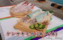 ケンサキイカ 700g~800g (5本~7本)