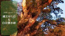 【装備レンタル付!】縄文杉1泊&白谷雲水峡