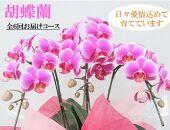 【定期便】胡蝶蘭お楽しみ定期便【年6回】