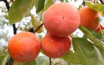 【先行予約】[甘柿の王様]和歌山産富有柿約7.5kgサイズおまかせ[2021年11月~発送]
