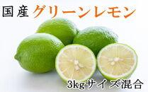 【先行予約】【産直】和歌山産グリーンレモン約3kg(サイズ混合)
